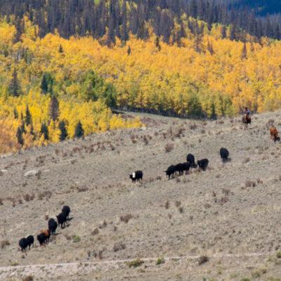 Cowboys near N Clear Creek Falls