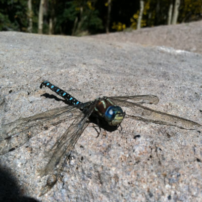 A cool dead dragon fly