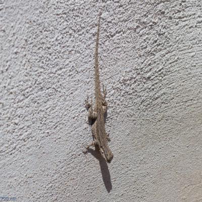 Lots of little Salamader kinda lizards everywhere!