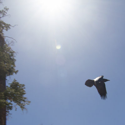 Taken at Rainbow Point @ Bryce Canyon.  I assume this Raven had a message for someone tied to its leg.