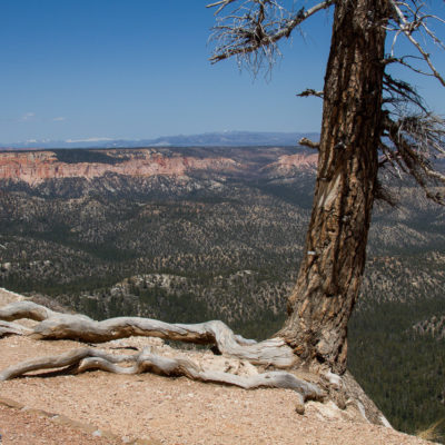 NO Tree!!  DONT JUMP!  @ Bryce Canyon.
