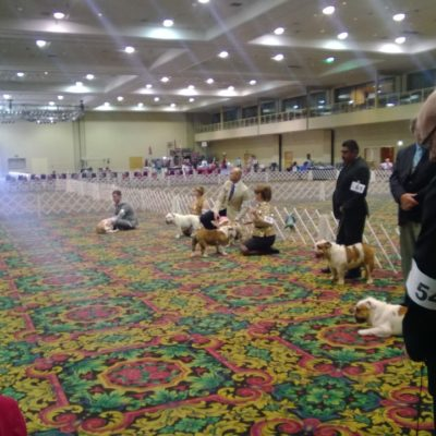 There was a Dog show down the hall, so mid week the hotel was overrun by dogs.